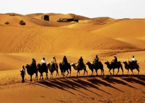 Silk Road Adventure - Camels in the desert