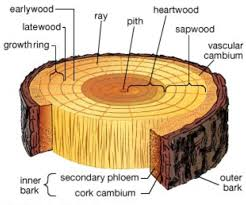 Formation of timber.