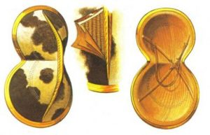 Reconstruction of the outside of a figure-eight shield (left), Cutaway to show wicker core and layers of hide (centre), and inside of shield showing cross-stretchers and neck strap (right). From The Greek Armies by Peter Connolly.